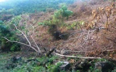 Ríos Vivos Antioquia denuncia tala  de más de 4.000 hectáreas de bosque en el cañón del río Cauca