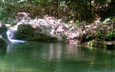 Corte Constitucional ordena proteger el agua, la salud y la seguridad alimentaria de comunidades que dependen del arroyo Bruno