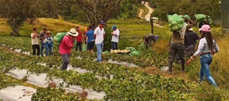 Informe del Secretario General: Misión de Verificación de las Naciones Unidas en Colombia