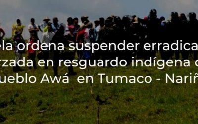 Tutela ordena suspender erradicación forzada en resguardo indígena del Pueblo Awá ubicado en Tumaco – Nariño
